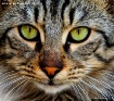 close up cat face