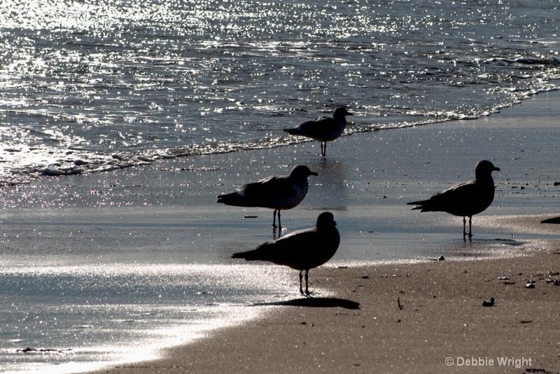 Gulls - ID: 13672792 © deb Wright