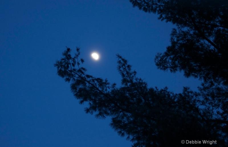 Tree with moon - ID: 13672798 © deb Wright