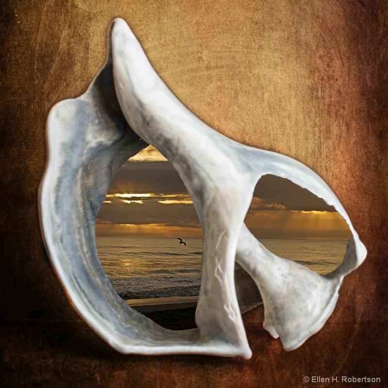 Gull thru shell