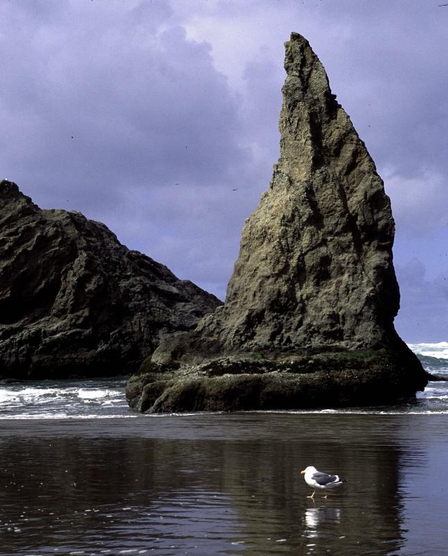 Seastack & Gull