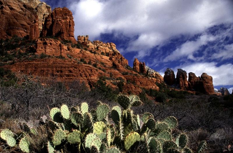 Red Rocks & Cactus