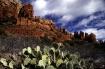 Red Rocks & Cactu...
