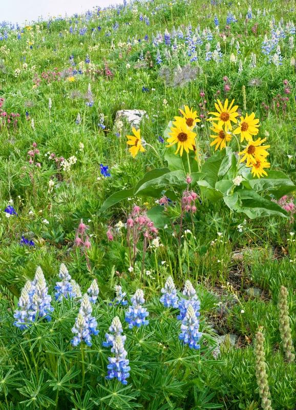 Infinite Flowers of Cement Ridge - ID: 13673814 © Deborah H. Zimmerman