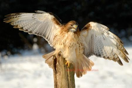 Hawk, Ontario, Canada