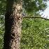 Tree face 2 - ID: 13675375 © deb Wright