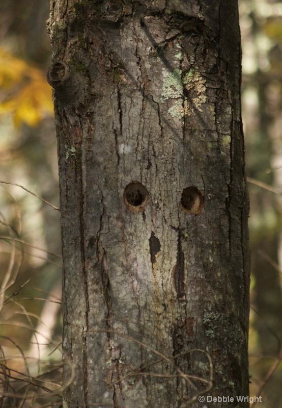Tree face - ID: 13675376 © deb Wright