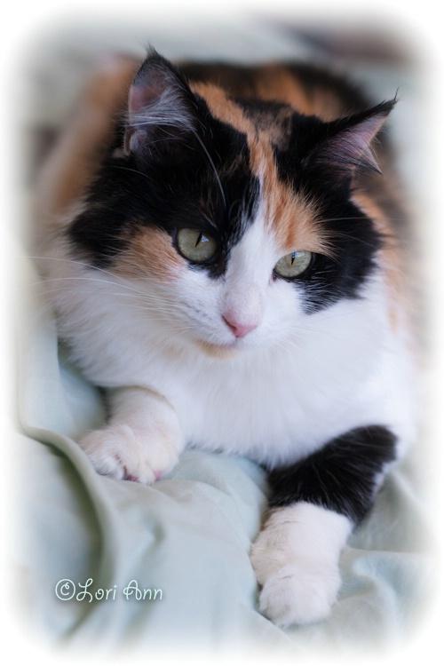Purr-tty Cat