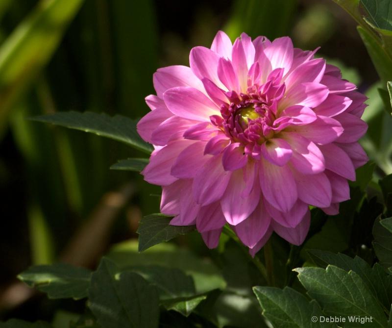 Morning Flower - ID: 13678393 © deb Wright