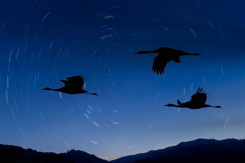 Twilight, Star Trails and Sand Hill Cranes #2