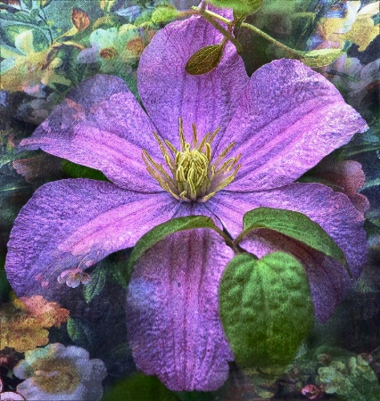 Clematis In Purple