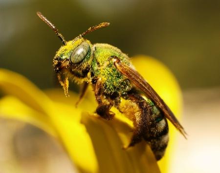 Drunk on Pollen