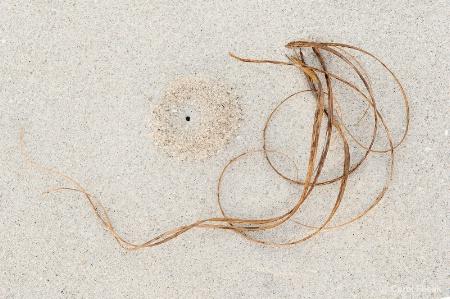 Natural Beach Art