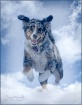 Fly Blue Dog