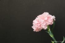 Flower five