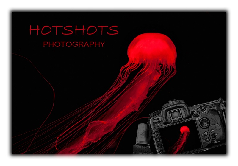 Welcome to HotshotsbyCathy.com