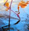 Flamingo Reflecti...