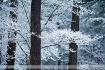 Winter Scene #570...