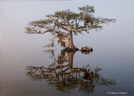 Good Morning, Blue Cypress Lake
