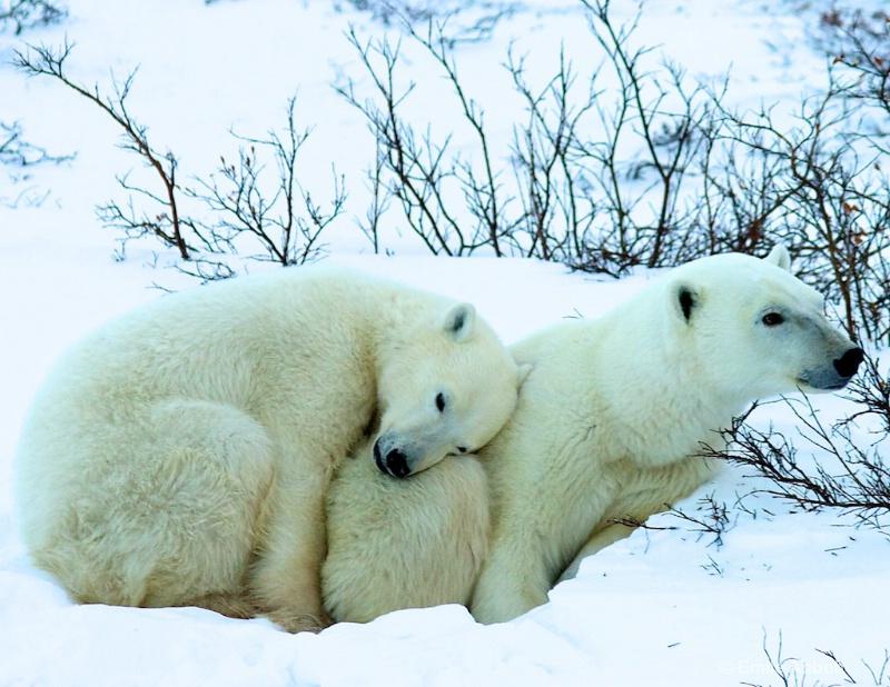 Arctic Love Story