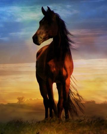 Art of Horse