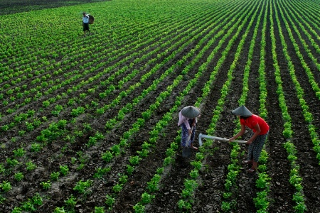 Beauty of farm in Myanmar.