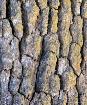 Oak Tree Textures...