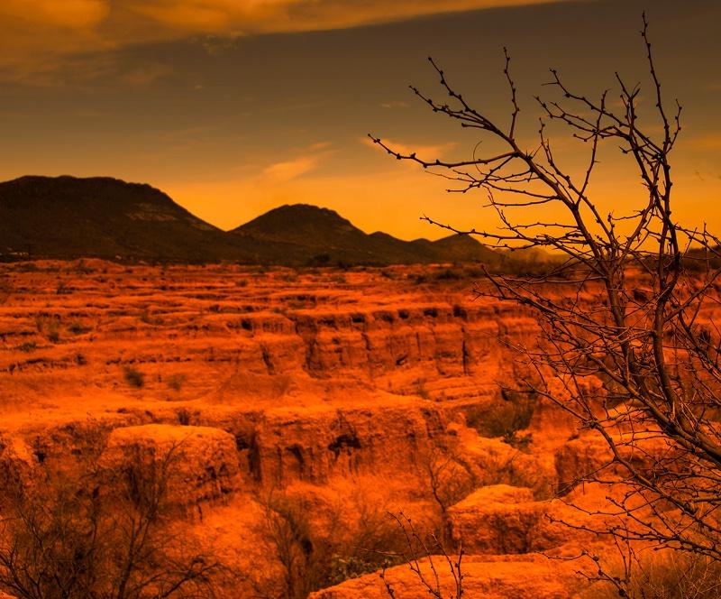 Desert and Bush Crop - ID: 13724178 © Denise Aulie