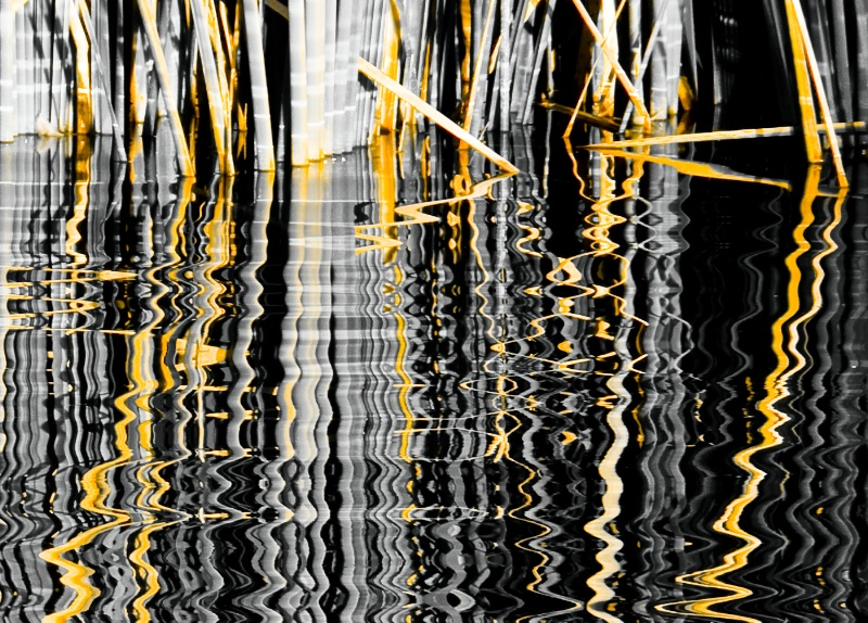 Black Water and Gold