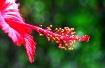 <i><b>New Bloom 2...