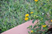 """flower- """"depth-of-field"""""""