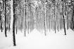 Winters Way