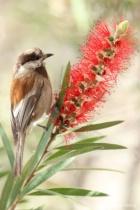 Sweet Nectar- light