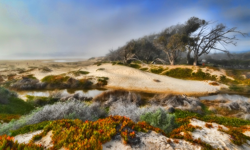 Foggy Day at Pismo Beach Dunes