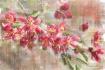 Cherry Blossom Wa...