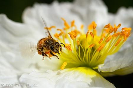 Worker Bee in Action