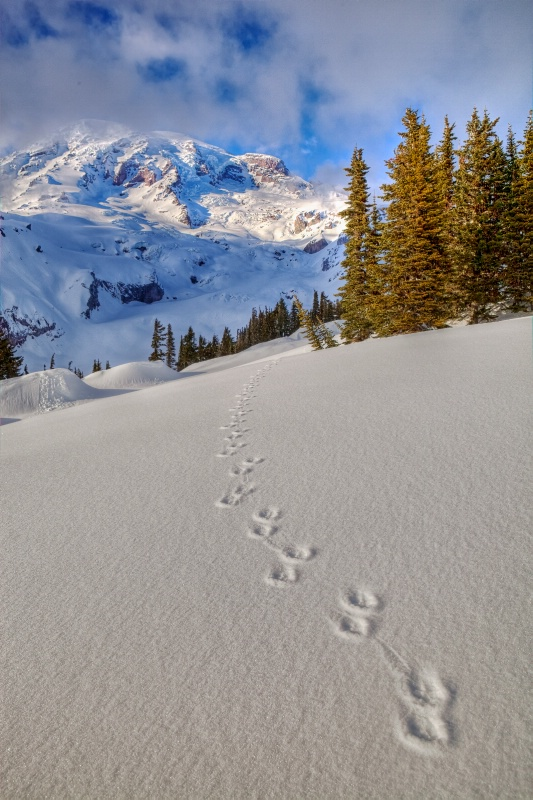 Follow The Tracks To Paradise