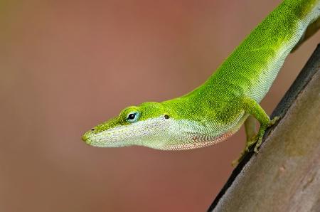My Green Friend