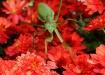 Praying Mantis on...