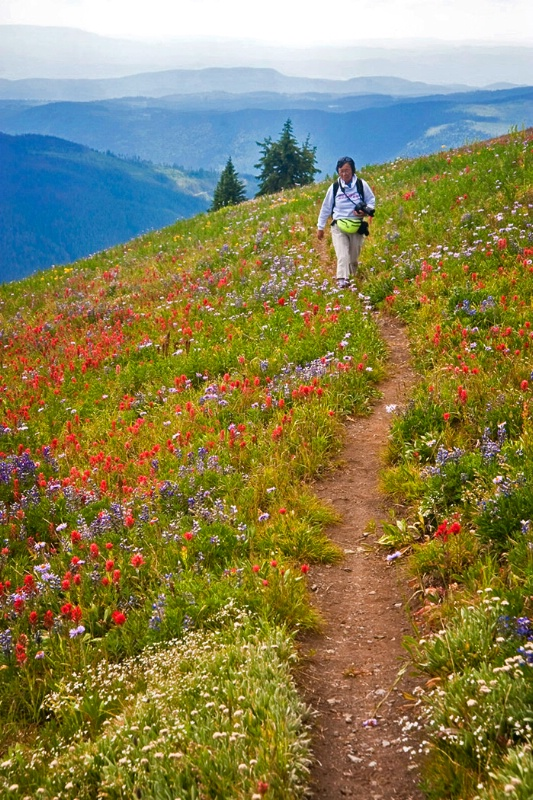 Hiking Through the Alpine Flowers - ID: 13748059 © Kelly Pape