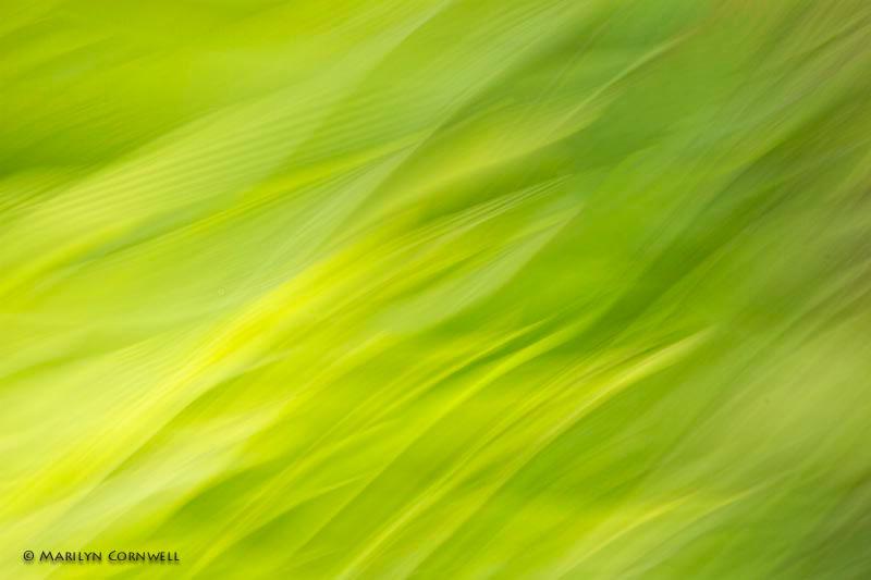 Palms in Flames - ID: 13751778 © Marilyn Cornwell