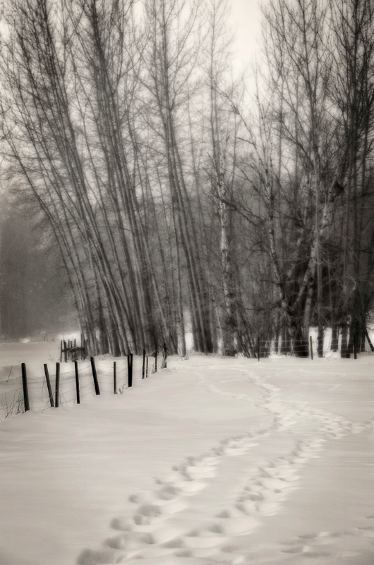 Snowy Pathway - ID: 13753222 © Kelly Pape