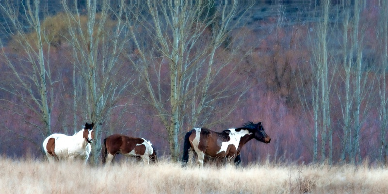 Painted Horses - ID: 13753884 © Kelly Pape