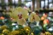 Orchid Swirls