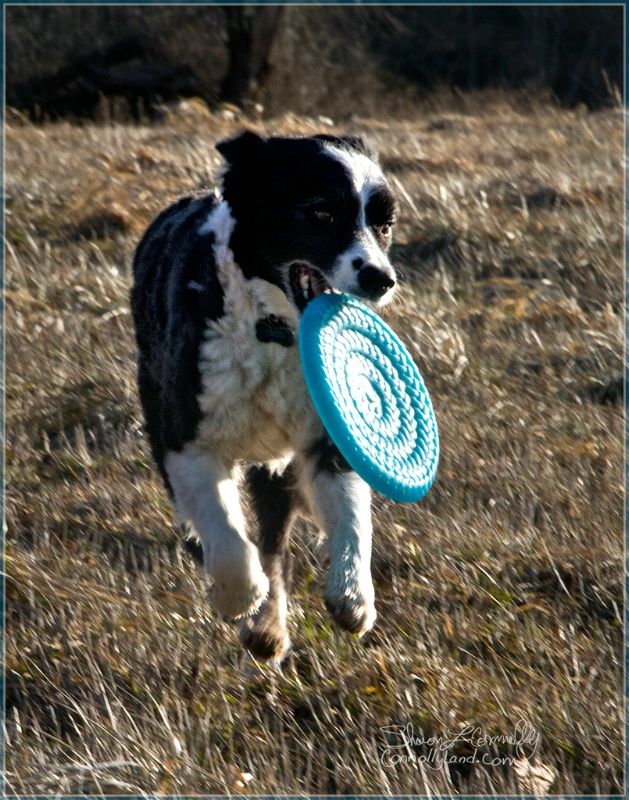 Dancing with a Blue Frisbee