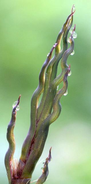 Bamboo Shoot - ID: 13763870 © cari martin