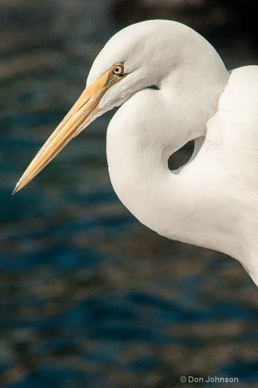 Florida Egret - ID: 13777700 © Don Johnson