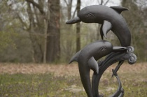 DOLPHINS@@   SHALLOW DEPTH OF FIELD