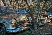 Automobile Forest