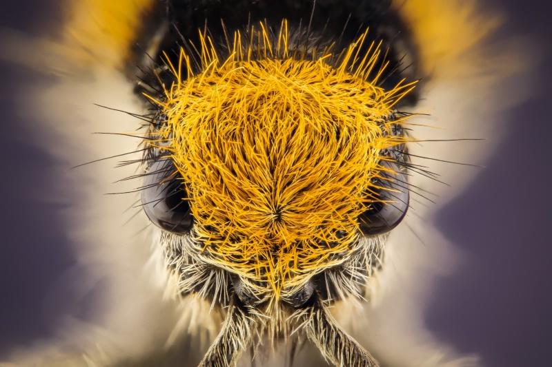 Extreme Macro Bug